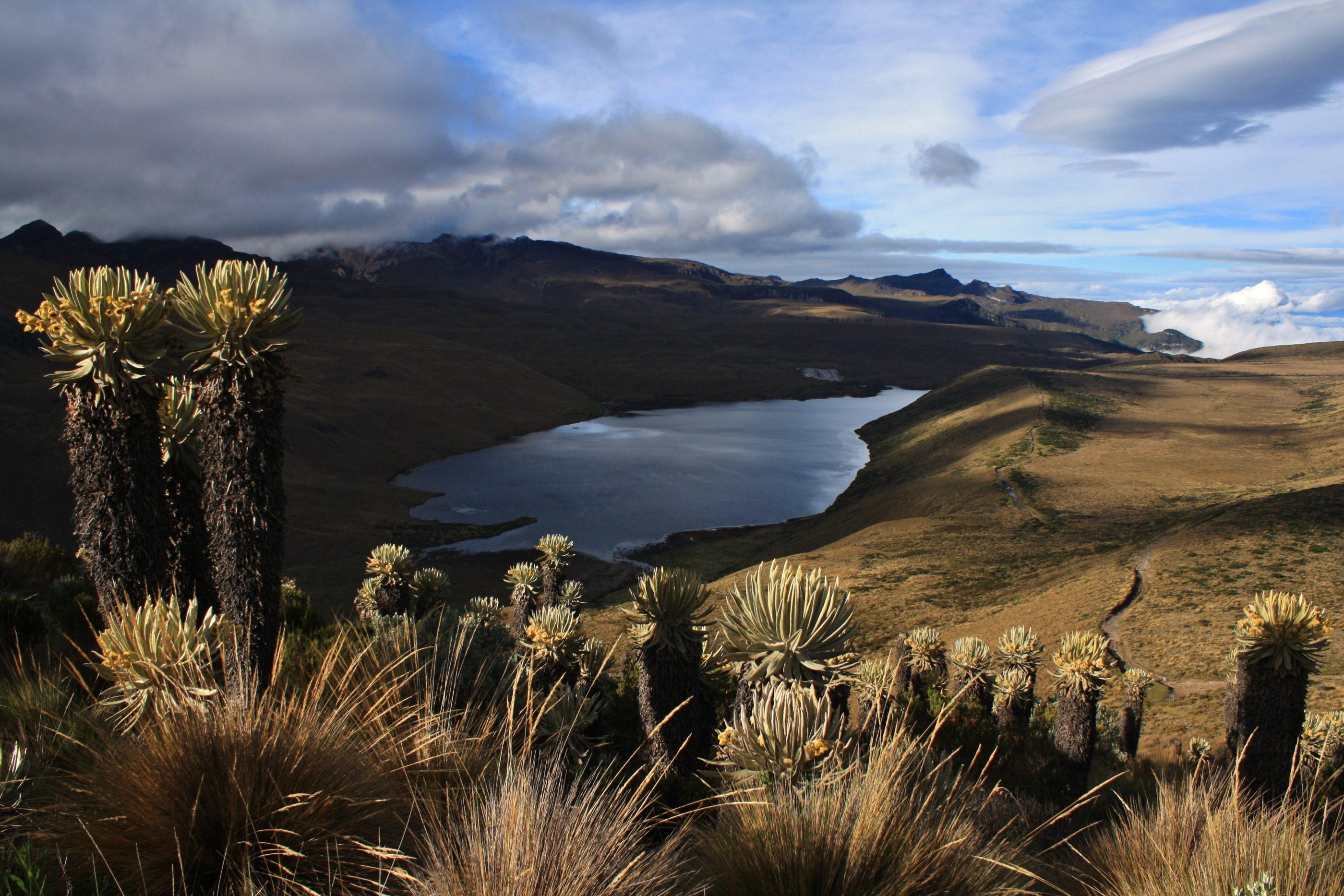 Die Laguna del Otún im Parque Nacional Natural Los Nevados mit Frailejones, der typischen Pflanze des Páramos