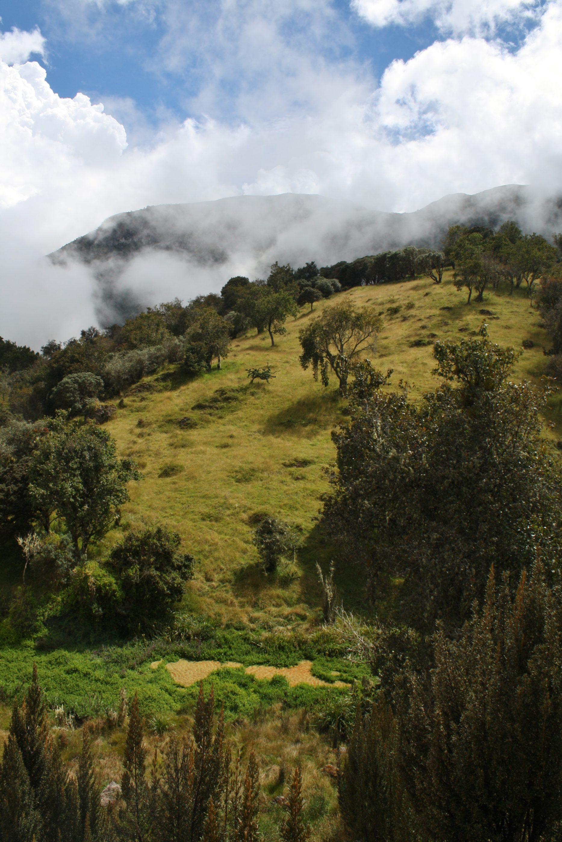 """Bosque Encanto - """"Zauberwald"""" - Parque Nacional Natural Los Nevados"""