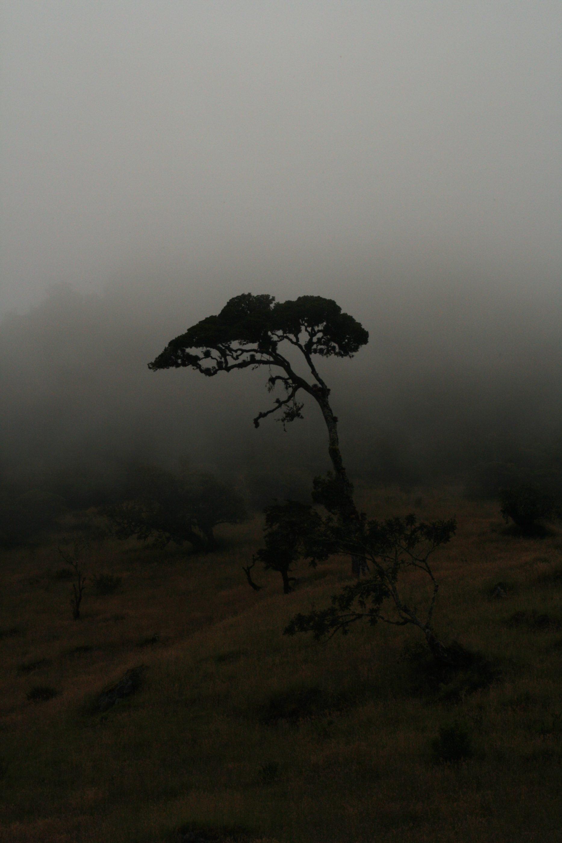 Der Nebel verschluckt das Tageslicht